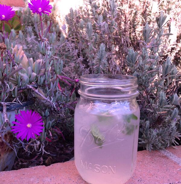 Syrup Hoa Oải Hương - Lavender 2